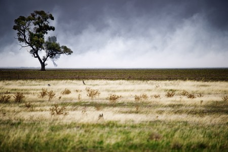 enveloped: Focus on tree that is about to be enveloped by a fire Stock Photo