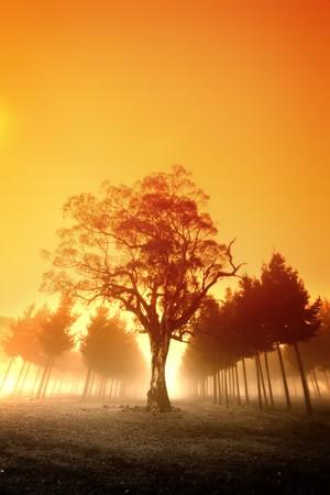 태양이 호주의 숲을 뛰어 넘습니다. 스톡 콘텐츠