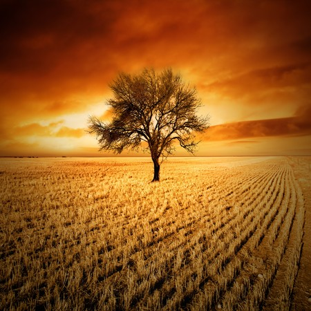 barren: Amazing sunset over a tree in a field Stock Photo