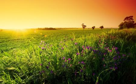 Spring Sunset in the Barossa Standard-Bild