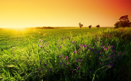 australia farm: Spring Sunset in the Barossa Stock Photo