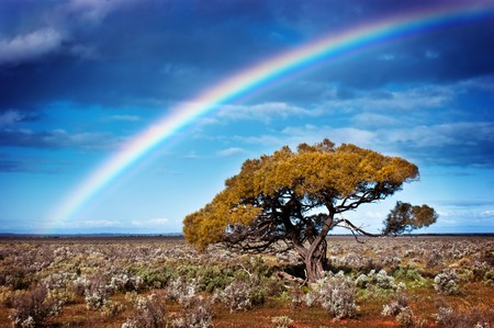 Rainbow over a lone tree in the desert Stock Photo