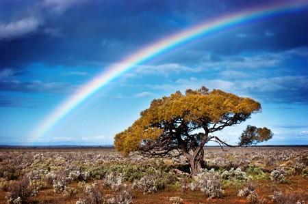 Rainbow over a lone tree in the desert Standard-Bild