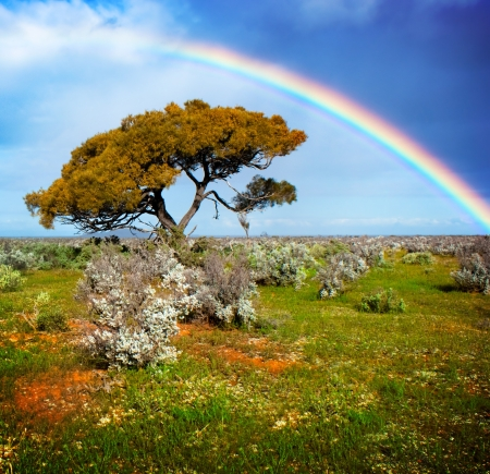 Rainbow over a lone tree Stock Photo