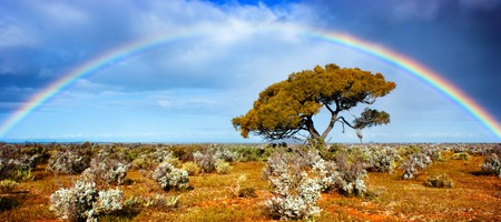 Beautiful rainbow over a single tree in the desert Stock Photo