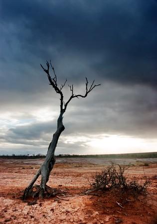arbre mort: Arbre mort dans le d�sert d�sol� Banque d'images