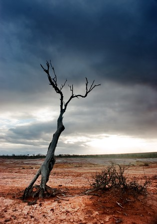 death and dying: Dead tree in the desolate desert