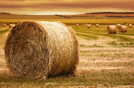 시골 필드에서 전경에서 건초 베일에 초점