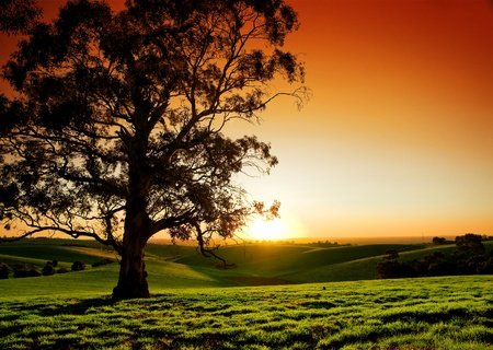 australia farm: Beautiful Sunset over a rural meadow