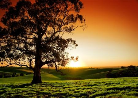 Hermoso atardecer en una pradera rural