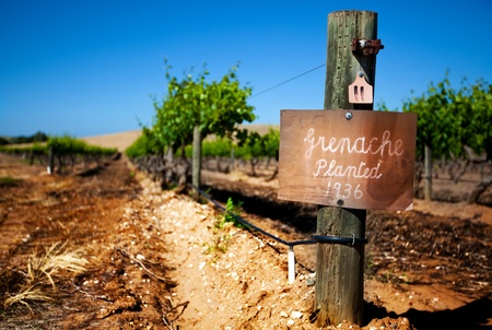 Row of vines in the Barossa Valley - focus on sign post Stock Photo - 9544929