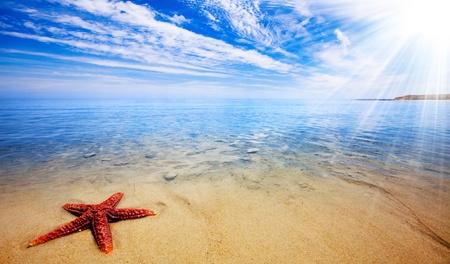 Sun rays shine on beautiful red starfish photo