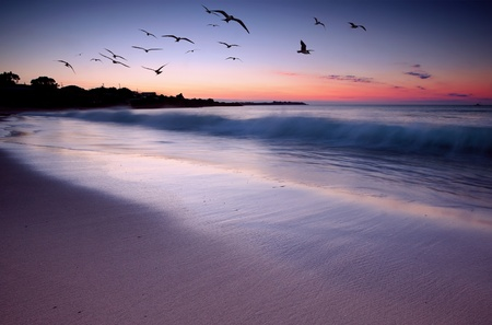 Waves crashing on beach at sunset with birds flying by Stock Photo