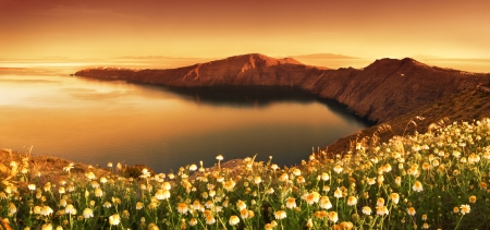 Sunrise Wildflowers on Santorini photo