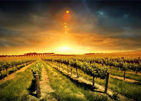 australia farm: Beautiful Sunset over a Barossa Vineyard