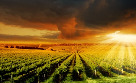 australia farm: A Beautiful Sunset over an Adelaide Hills winery