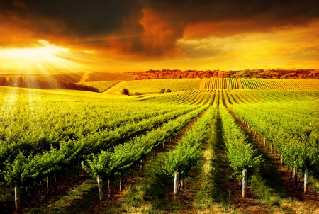 wineries: A Beautiful Sunset over a Barossa Vineyard