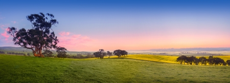 australia: Panoramic field in the Clare Valley, South Australia
