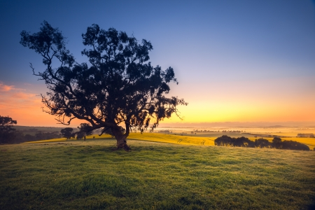 농촌 필드 위에 아름 다운 호주 사우스 일출 스톡 콘텐츠