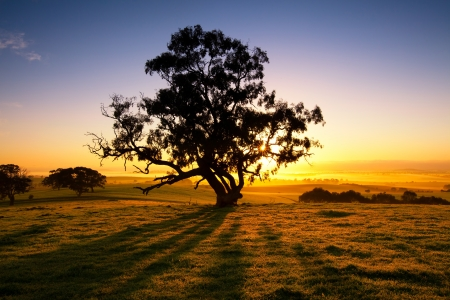 australia farm: Sun rises over the Clare Valley, South Australia Stock Photo