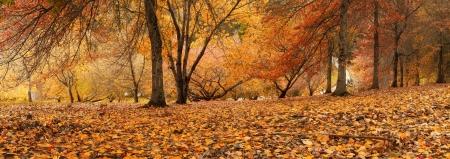 사우스 오스트레일리아에서 화려한 가을 장면 스톡 콘텐츠