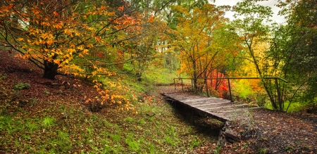 lofty: Beautiful forest full of autumn colours