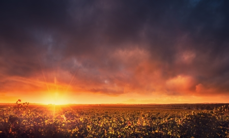 Sunset over the Barossa Valley, South Australia photo