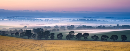 australia farm: Sunrise in the Clare Valley, South Australia