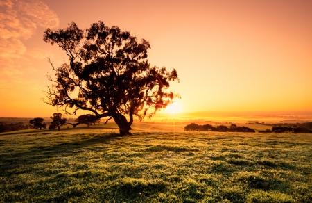 클레어 밸리의 아름다운 일출 스톡 콘텐츠