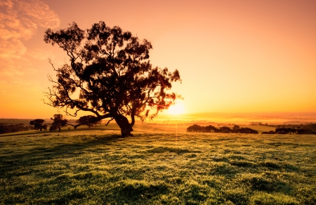 Beautiful sunrise in the Clare Valley