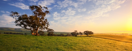 australia landscape: A country field in Clare, South Australia Stock Photo