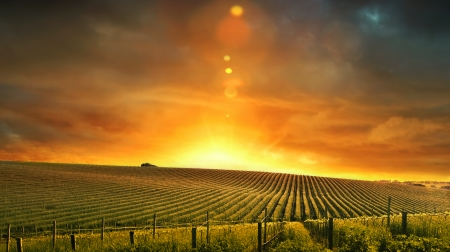 australia farm: Vineyard Morning Stock Photo