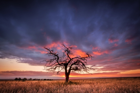 Silhouette of a tree in the Flinders Ranges, South Australia Stock Photo