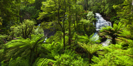 triplet: Beautiful Rainforest with Waterfall Stock Photo