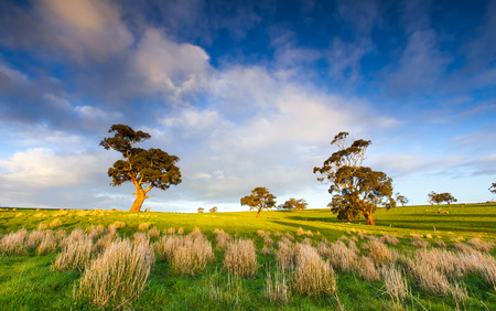 australia farm: Late afternoon in the Clare Valley