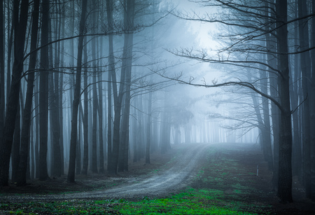 Moody forest with heavy fog Stock Photo