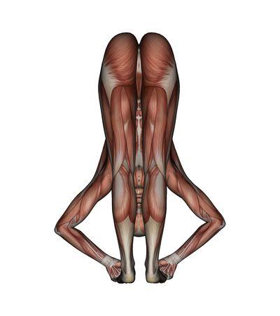 poise: Yoga - Big Toe Pose. Female Muscles - Back View