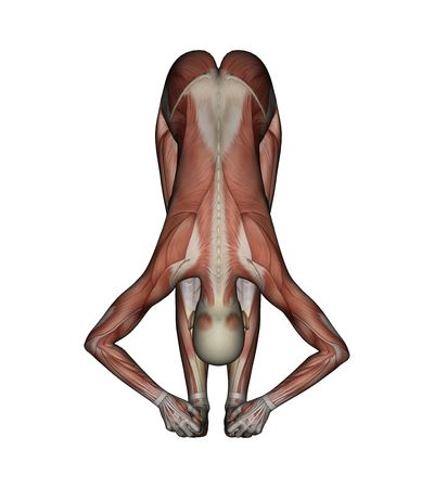toe: Yoga - Big Toe Pose. Female Muscles - Front View