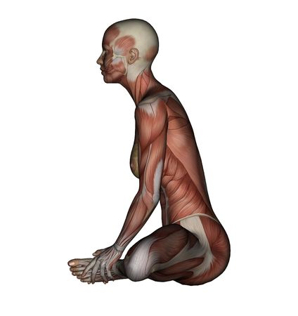 musculature: Yoga - Bound Angle Pose. Female Muscles - Side View