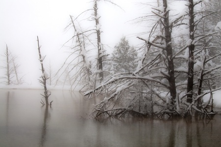Snow covered trees surrounded by geyser mist