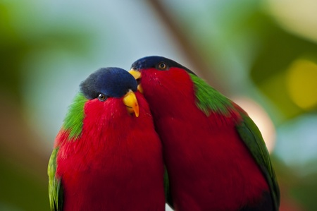 bandada de p�jaros: Dos pajaritos en el juego del amor Foto de archivo