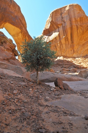 Small tree groing on the rock under Double Arch in Moag Utah photo