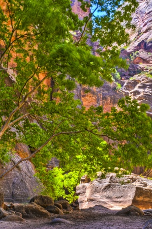 River Narrows Trail in Zion National Park photo