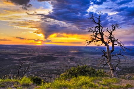 mesa: HDR image of dead tree against dramatic stormy sky taken in Mesa Verde National Park in Colorado Stock Photo