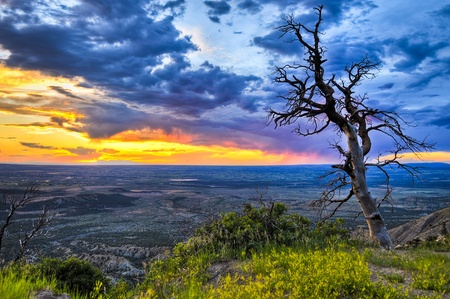 HDR image of dead tree against dramatic stormy sky taken in Mesa Verde National Park in Colorado Stock Photo