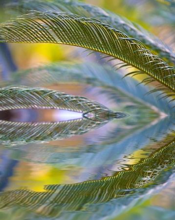 Bright vivid palm branches reflection in crystal clear water Stock Photo - 12015114