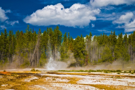 pressurized: Small yellowstone geyser erupting against tall pine trees and summer sky