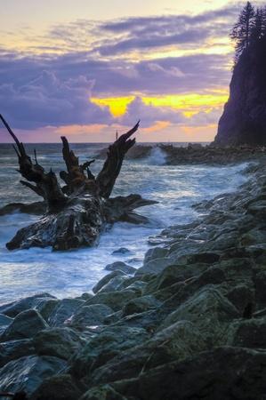 Fallen tree crashing waves and beauriful sunset at La Push Beach photo