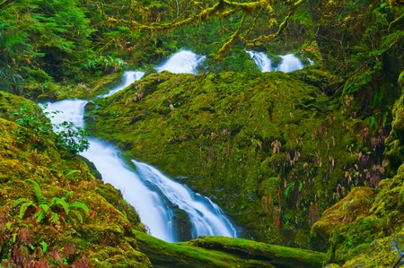 Spectacular Cascade in Olympic National Park surrounded by green fern and giant boulders covered in moss photo
