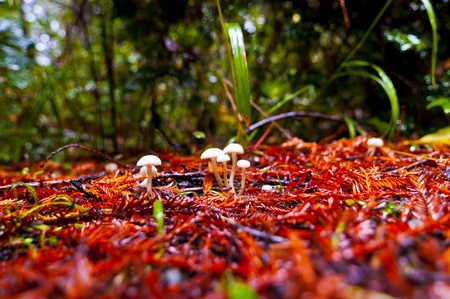 Wild small mushrooms growing on the trail in redwoods national park photo